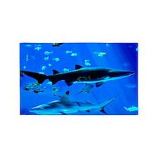 2 Black Tipped Sharks 3'x5' Area Rug