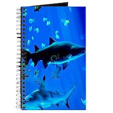 2 Black Tipped Sharks Journal