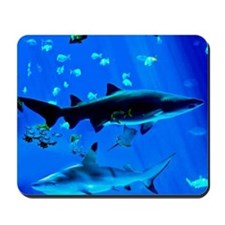 2 Black Tipped Sharks Mousepad