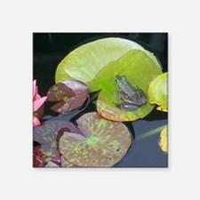 """Close Up Frog on Lily Pad Square Sticker 3"""" x 3"""""""