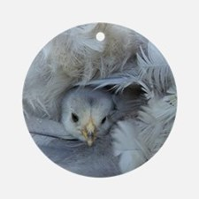 chickens chicks in the spring Round Ornament