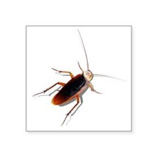 "Pet Roach Square Sticker 3"" x 3"""
