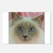 Siamese Cat gifts Postcards (Package of 8)