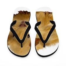 Guinea Pig gifts Flip Flops