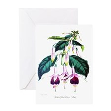 Paxton's Fuchsia Queen Victoria Greeting Card