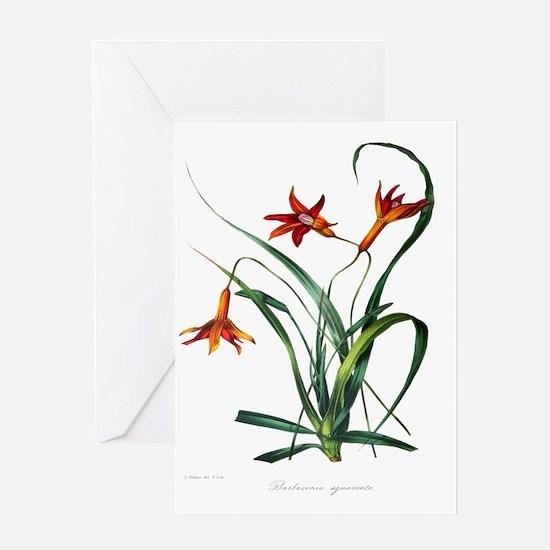 Paxton's Barbacenia squamata Greeting Card