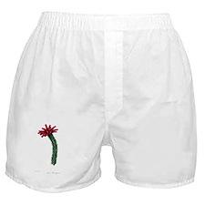 Paxton's Erica Murrayana Boxer Shorts