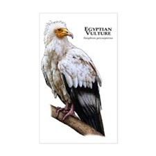 Egyptian Vulture Decal