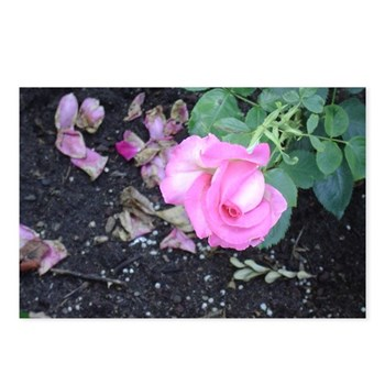 this light pink rosebud is just beginning to bloom ©Amy Marie 2004 chasingthegnome