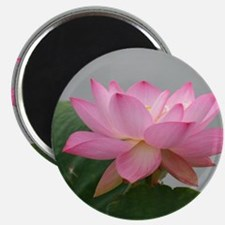 Pink Lotus flower Magnets