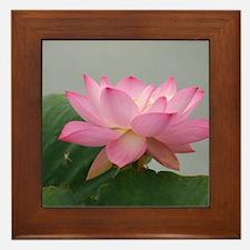 Pink Lotus flower Framed Tile