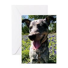 Blue Heeler Card Greeting Cards