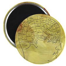 Brain Map Magnets