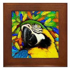 Gold and Blue Macaw Parrot Fantasy Framed Tile
