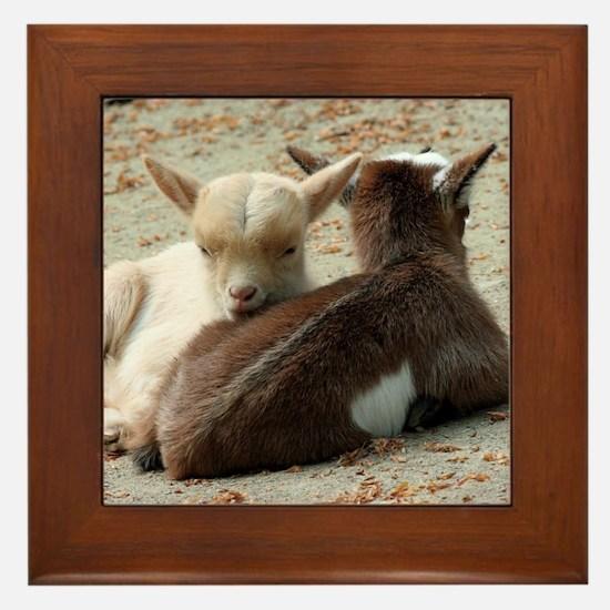 Goat 001 Framed Tile