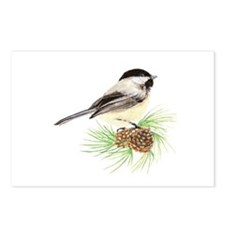 Chickadee Bird on Pine Branch Postcards (Package o