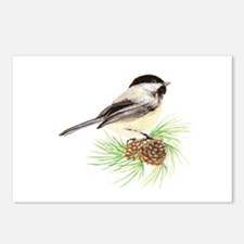 Chickadee Bird on Pine Branch Postcards (Package o