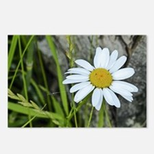 Daisy Flower Postcards (Package of 8)