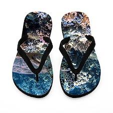 sea turtle Flip Flops