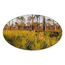 Florida Scrub Decal