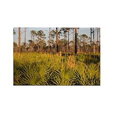 Florida Scrub Rectangle Magnet