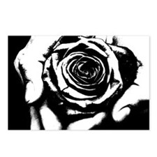 rose in Hand Postcards (Package of 8)