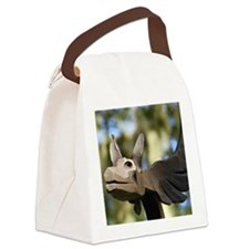 Oink Canvas Lunch Bag
