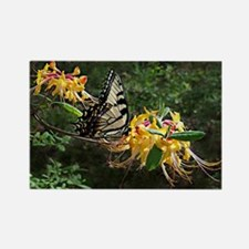Eastern Tiger Swallowtail (Papili Rectangle Magnet
