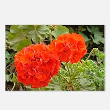 Orange Geranium  Postcards (Package of 8)