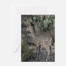 Fawn 4 Greeting Cards