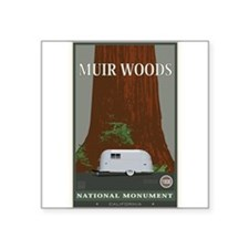 muir_woods_1 Sticker