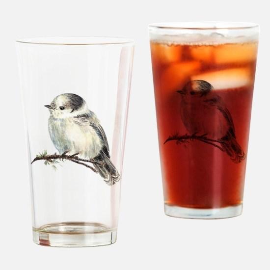 Cute Friendly Canada, Gray or Grey Jay Drinking Gl