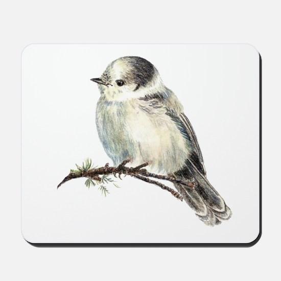 Cute Friendly Canada, Gray or Grey Jay Mousepad
