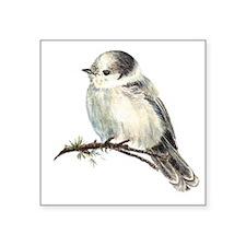Cute Friendly Canada, Gray or Grey Jay Sticker