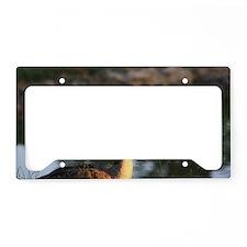 Canadian Goose closeup License Plate Holder