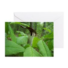 Wild Jack-In-The-Pulpit (Arisaema tr Greeting Card