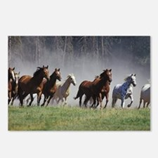 Galloping Horses Postcards (Package of 8)