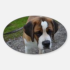 Cute Saint Bernard Sticker (Oval)