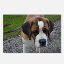 Cute Saint Bernard Postcards (Package of 8)