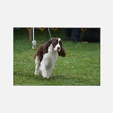 Springer Spaniel  Dog Rectangle Magnet