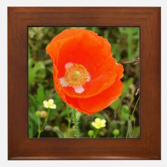 Orange Poppy Framed Tile