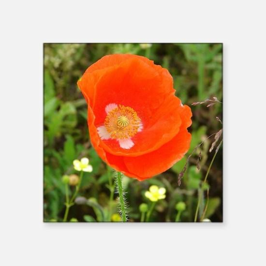 "Orange Poppy Square Sticker 3"" x 3"""