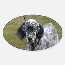 Cute Black and White English Setter Sticker (Oval)
