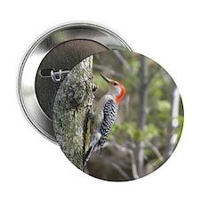 "Red Headed Woodpecker  2.25"" Button"