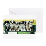 Australian shepherd Greeting Cards (10 Pack)