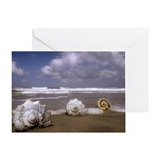 Seashells on the Shore3 Greeting Card