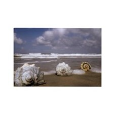 Seashells on the Shore3 Rectangle Magnet