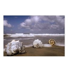 Seashells on the Shore3 Postcards (Package of 8)