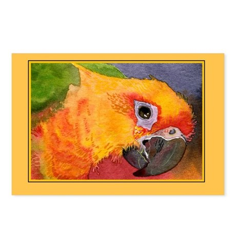 Sun Conure Parrot Postcards (Package of 8)