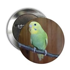 "Budgie 2.25"" Button"